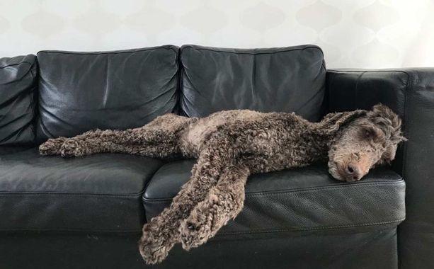 Nyt Häpi kerjää tyytyväisenä rapsutuksia sohvalla.