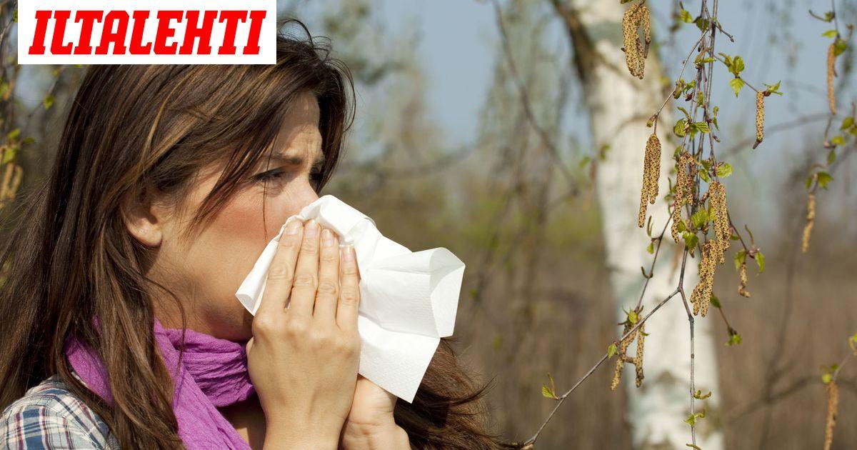 Koivu Allergia