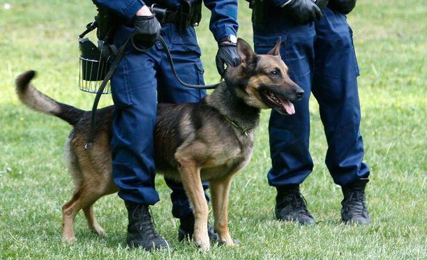Poliisikoira on tapauksen jälkeen palannut palvelukseen normaalisti. Kuvan koira ei liity tapaukseen.