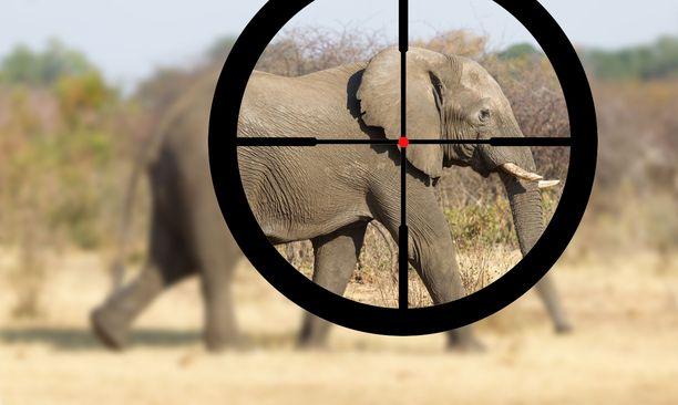 Noin kolmannes koko Afrikan mantereen elefanteista elää Botswanassa.