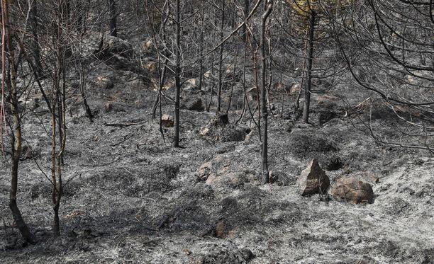 Palanutta metsää (arkistokuva).