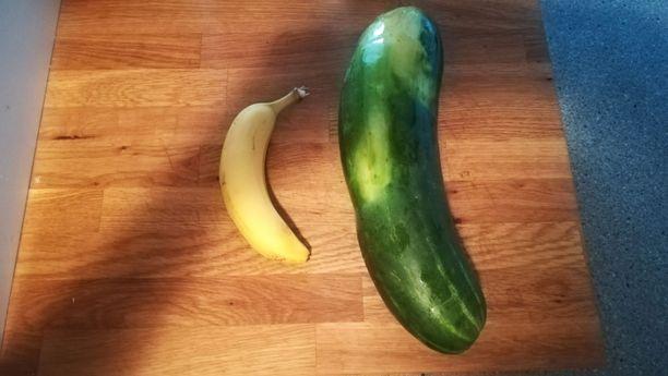 Tavalliseen banaaniin verrattuna kurkku näyttää valtavalta.