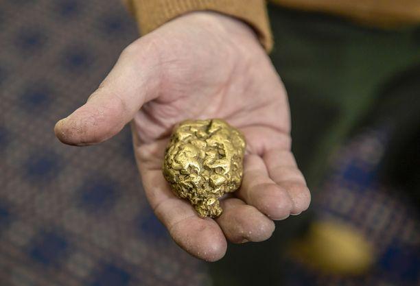 Kultakaivos on joutunut rikostutkinnan kohteeksi Orivedellä. Arkistokuva Suomen suurimmasta kultahipusta Evertistä, joka painaa 392,9 grammaa.