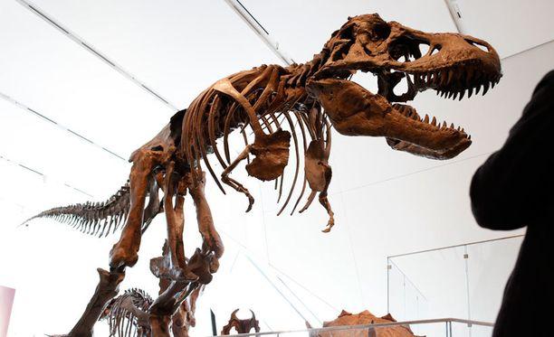 Tyrannosaurus rexin luuranko torontolaismuseossa maaliskuun lopulla.