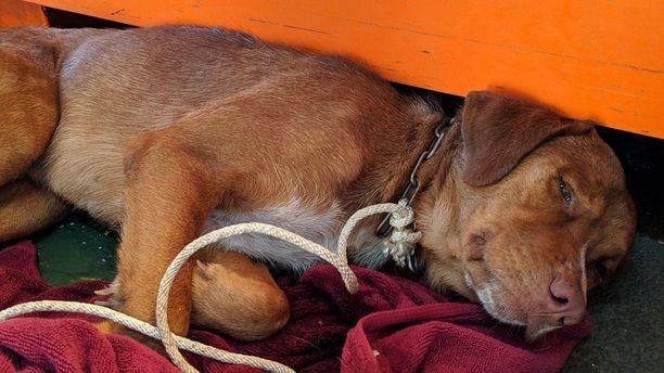 Kun Bonrood oli juotettu ja ruokittu, se pestiin perusteellisesti merivedestä. Sen jälkeen maistui uni.