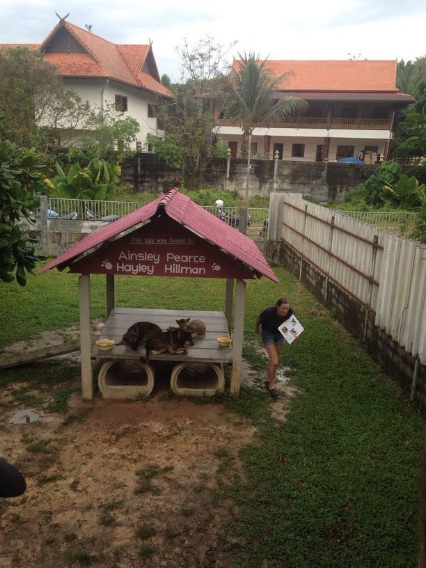 Koirat elävät sovussa keskuksen toisella puolella. Turistien apua tarvitaan muun muassa niiden ulkoiluttamiseen.
