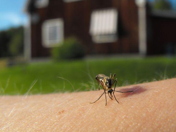 Hyttysmyrkyn käyttöohjeet kannattaa lukea huolellisesti ja niitä kannattaa noudattaa.