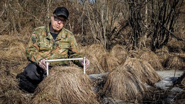 """Jari Mäntylä asettui itse kuvaan antamaan """"peruukeille"""" mittakaavaa. Kuvan tupsut ovat selvästi Norjan vastaavia järeämpää kalustoa."""