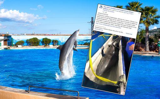 Särkänniemen iäkäs Veera-delfiini siirrettiin Kreikasta Italiaan – aktivistit älähtivät