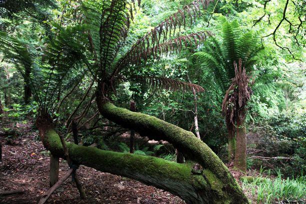 Kells Bay Gardensin subtrooppista kasvillisuutta. Golfvirran ansiosta paikan ilmasto on poikkeuksellisen lämmin.
