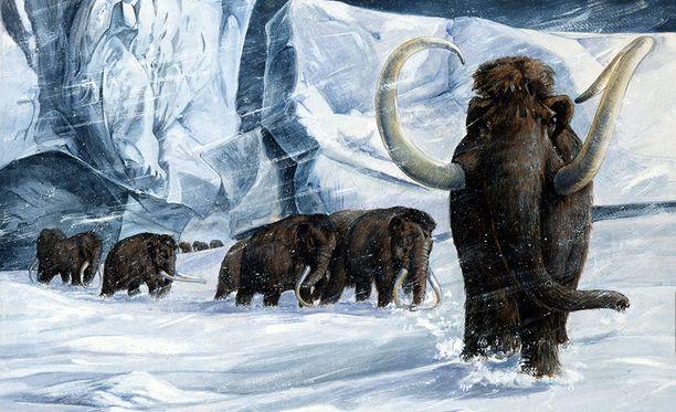 Kaikkein viimeisten mammuttien uskotaan eläneen Wrangelinsaarella Siperian rannikolla. Ne kuolivat sukupuuttoon noin 4 000 vuotta sitten.