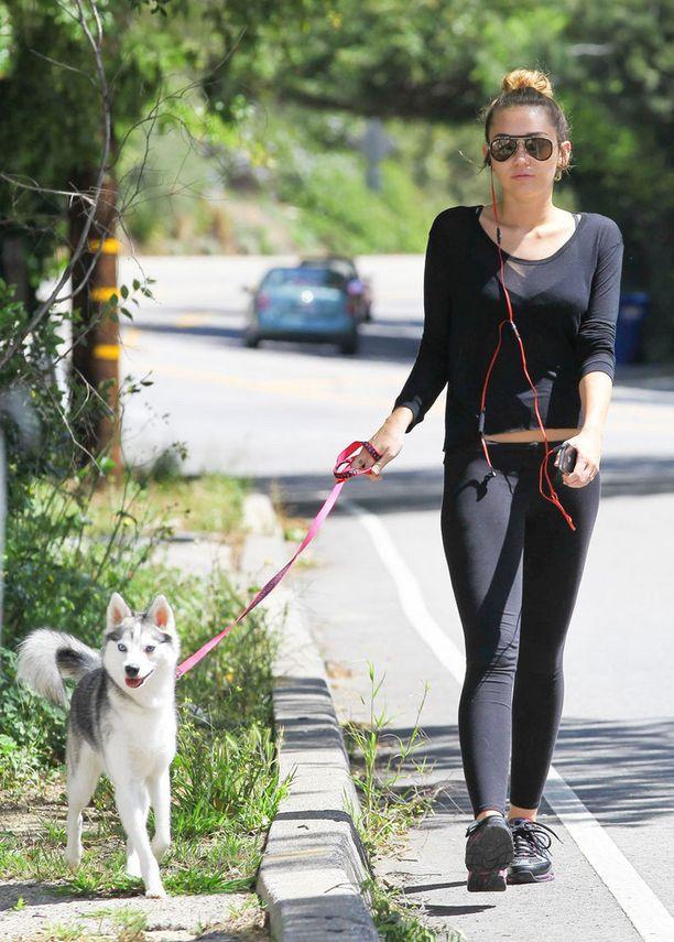 Floyd on yksi lukuisista Mileyn rescue-koirista.