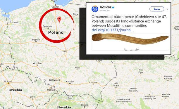 Suomalaisperäinen muinaisesine löytyi Golebiewosta, Puolasta.