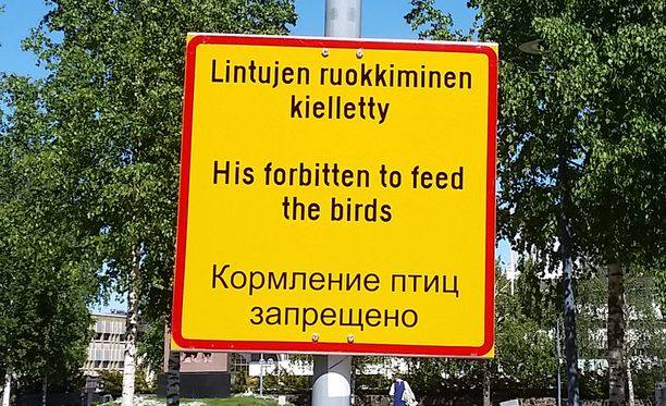 """""""His forbitten to feed the birds"""""""