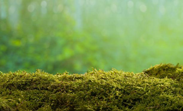 Monien mielestä sammal on kaunista, mutta jos nurmikko on kovalla kulutuksella, se ei ole kestävä.