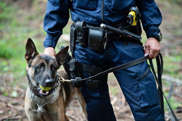 Poliisikoiraa puukotettiin pään ja kaulan alueelle. Kuvan koira ei liity tapaukseen.
