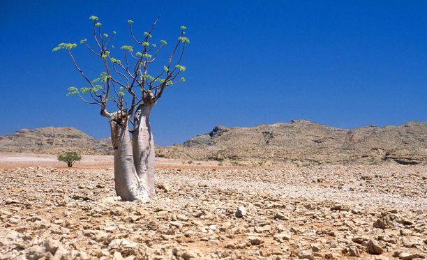 Aavikoituminen on merkittävä uhka, jonka torjuntaan tulisi ryhtyä voimallisesti, esittävät julkilausuman allekirjoittaneet tutkijat.
